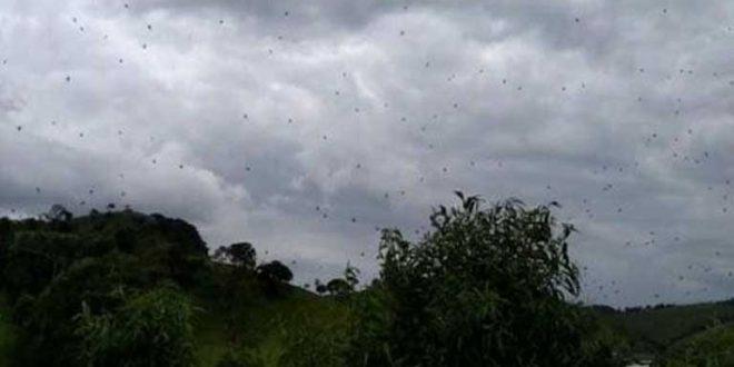 spider rain brazil