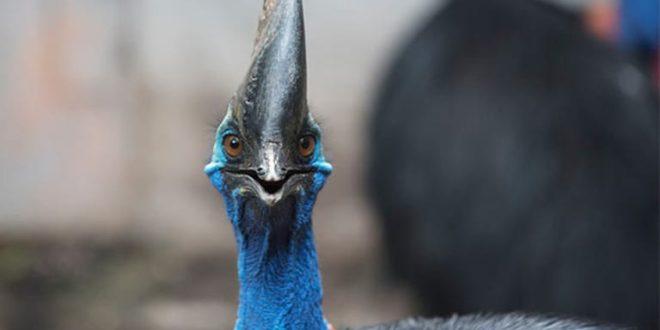 Florida cassowary attack