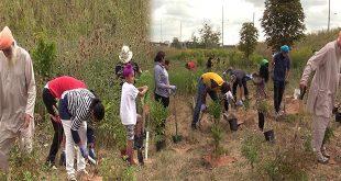 eco sikh plant 200 trees