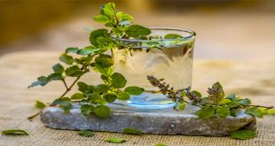 Consume tulsi on an empty stomach, relief from many troubles
